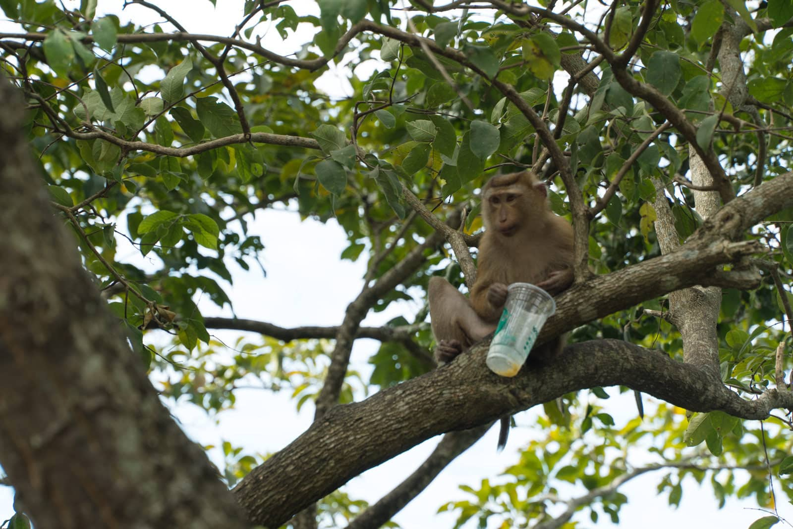 A monkey with a drink